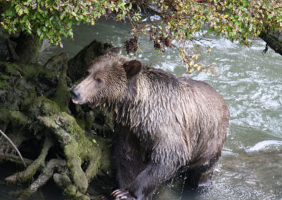Grizzly-Bear-Tours-Adventure-Quest