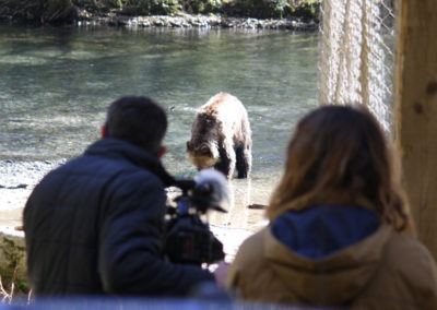 Grizzly-Bear-Tours-campbell-river