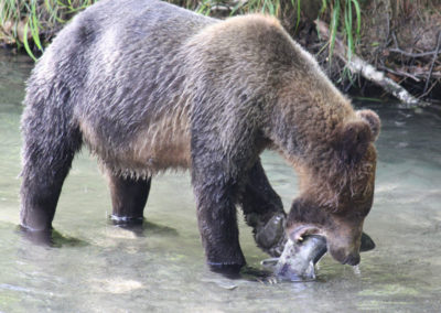 Platform-Grizzly-Bear-Tours-Vancouver-Island