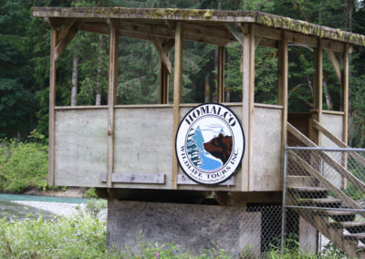 Platform-Grizzly-Bear-Tours-Wildlife-campbell-river
