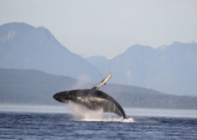 bc-whale-watching-tours