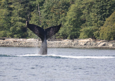 bc-whale-watching-tours-vancouver-island-experience