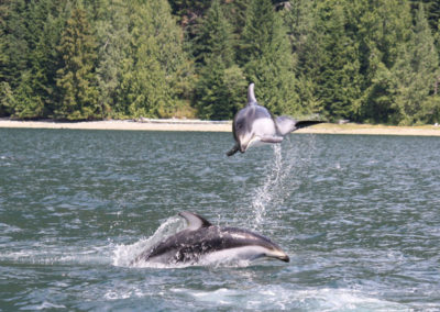 wildlife-viewing-tours-dolphins